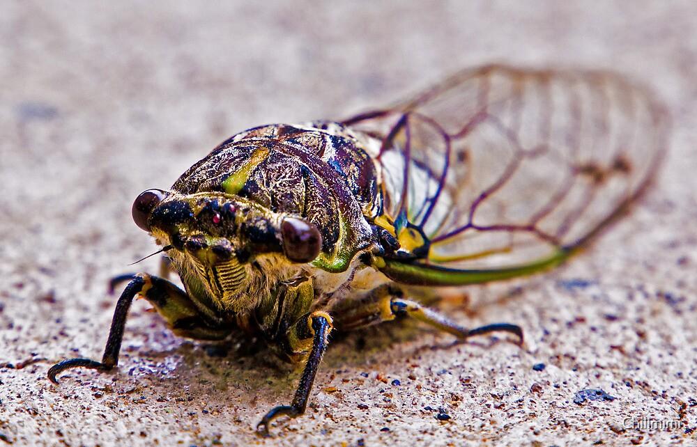 Cicada by Chillmimi