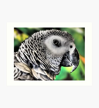 Feathered Friend Art Print