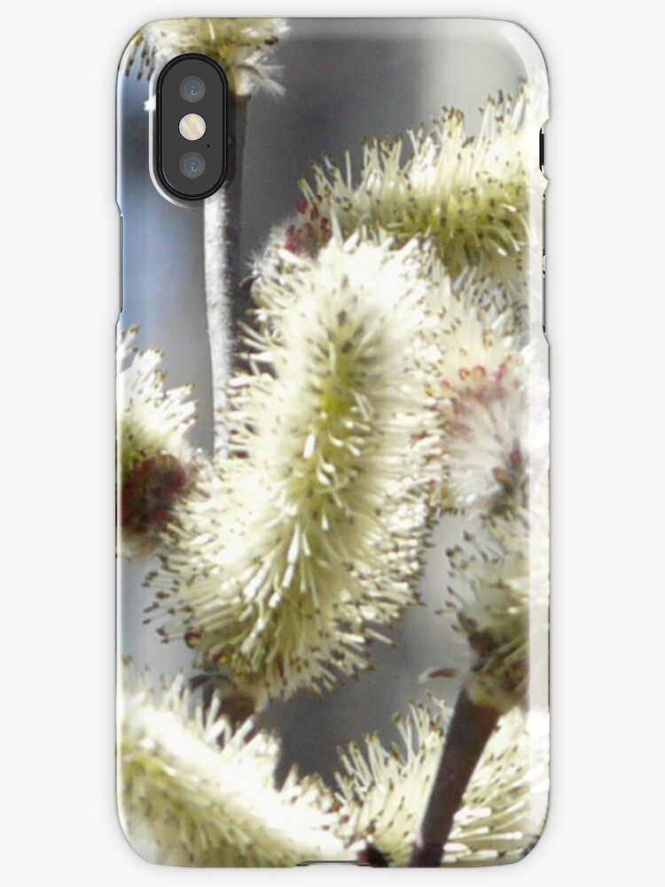 Pussy Willow Catkins. iPhone Case by MaeBelle