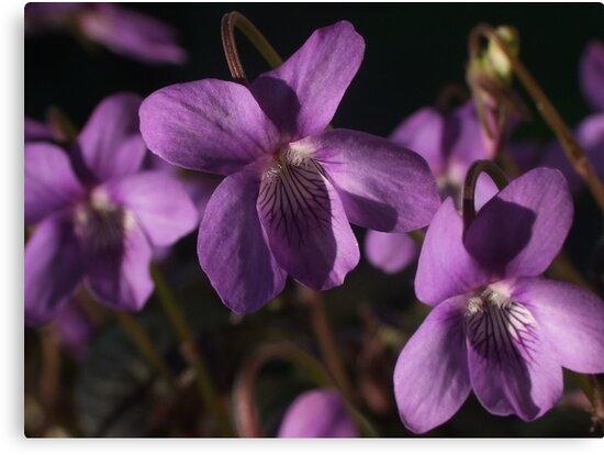 Sweet Violet by Gabrielle  Lees