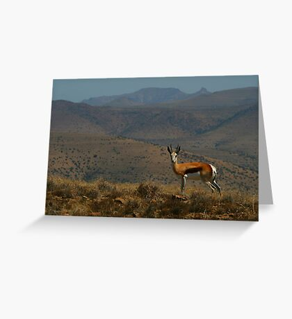 Springbok Landscape Greeting Card