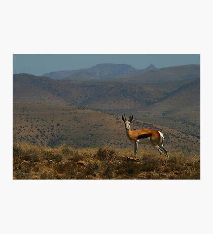Springbok Landscape Photographic Print