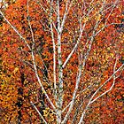 Autumn Glory by Harry Oldmeadow