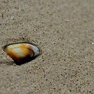 The Empty Shell by Stephen Monro