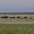 Elephants On The Move by Stephen Monro