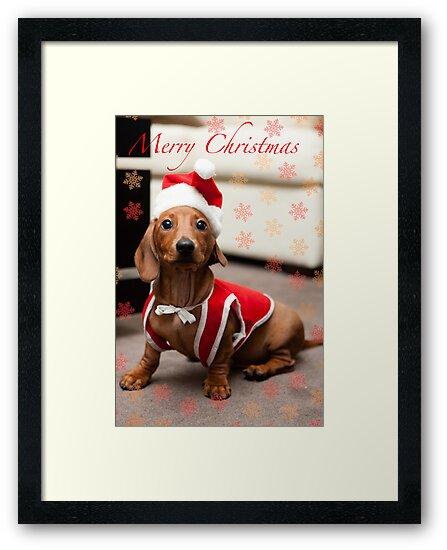 Merry Christmas Sausage Dog by Dave Reid