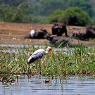 Stalkin' The Stork by Stephen Monro