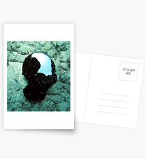 White Cowrie Shells With Mantle Postcards