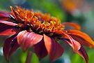 Orange Flower in a Garden by William Martin