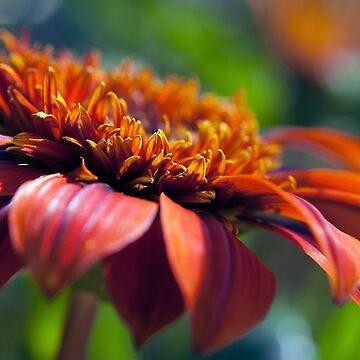 Orange Flower in a Garden by William63