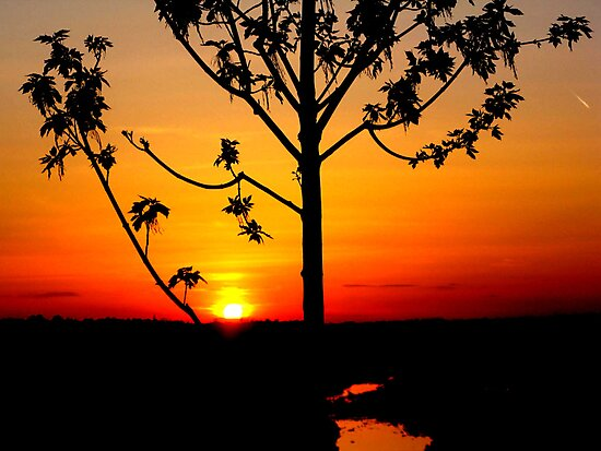 Sunset on The Snake River-Twin Falls Idaho, USA by Brenda Dahl