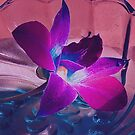 Ochid in a Glass Dish by browncardinal8