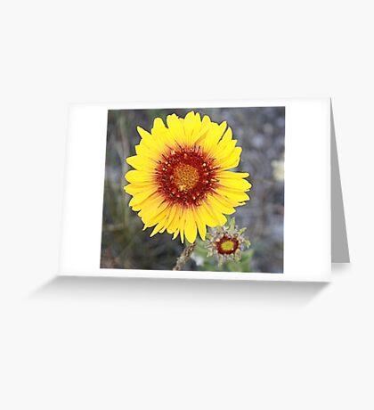 Blanket Flower (Gaillardia pulchella) Greeting Card