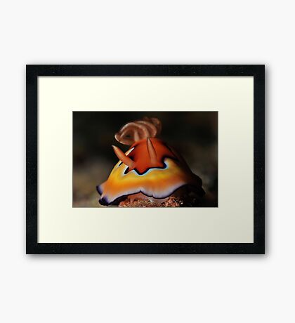 Co's Chromodoris Framed Print