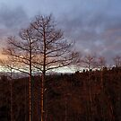 Leafless silhouette at sunset by Melanie Roelofs