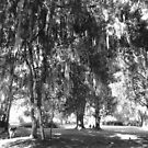 The Glory of Spanish Moss by Caren