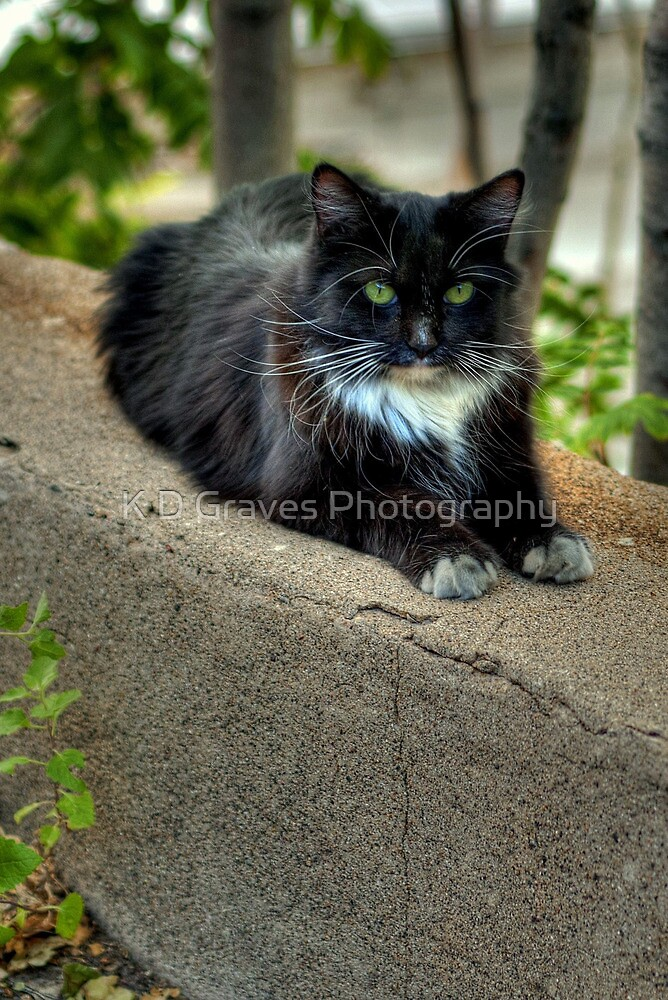 """ Kitty On The Curb"" by K D Graves Photography"