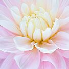 Perfect in Pink by Marilyn Cornwell