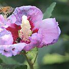 Pollen Socks by Louise Linossi Telfer