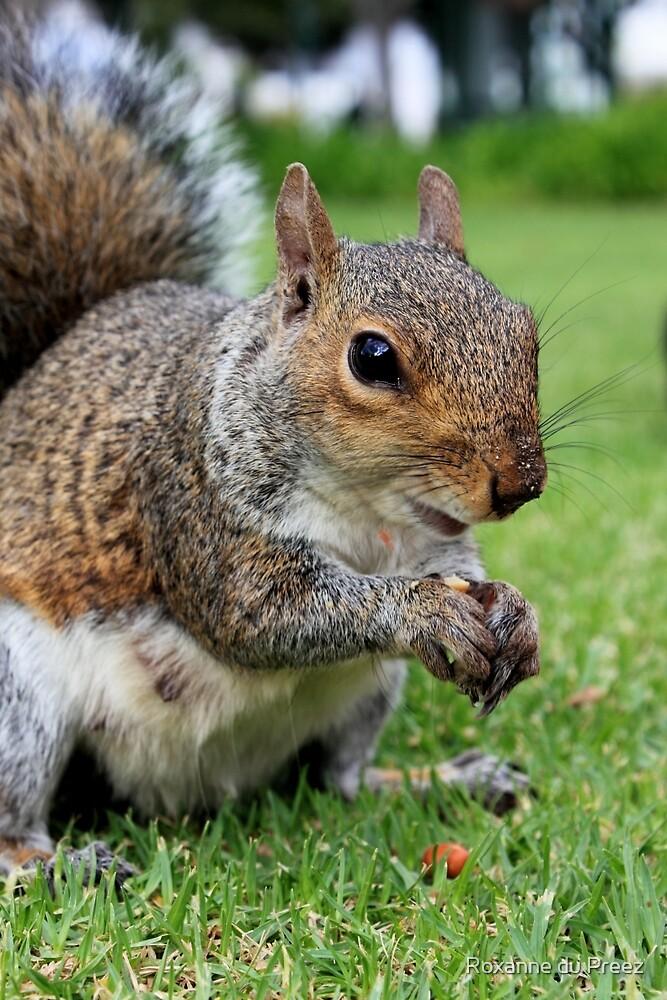 The Squirrel by Roxanne du Preez