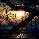 Sunrise © by Dawn Becker