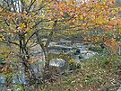 Autumn Comes to the Unami Creek by MotherNature