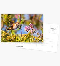 Rufous Hummingbird and Honeysuckle Postcards