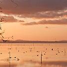Trasimeno lake by Mattia  Bicchi Photography