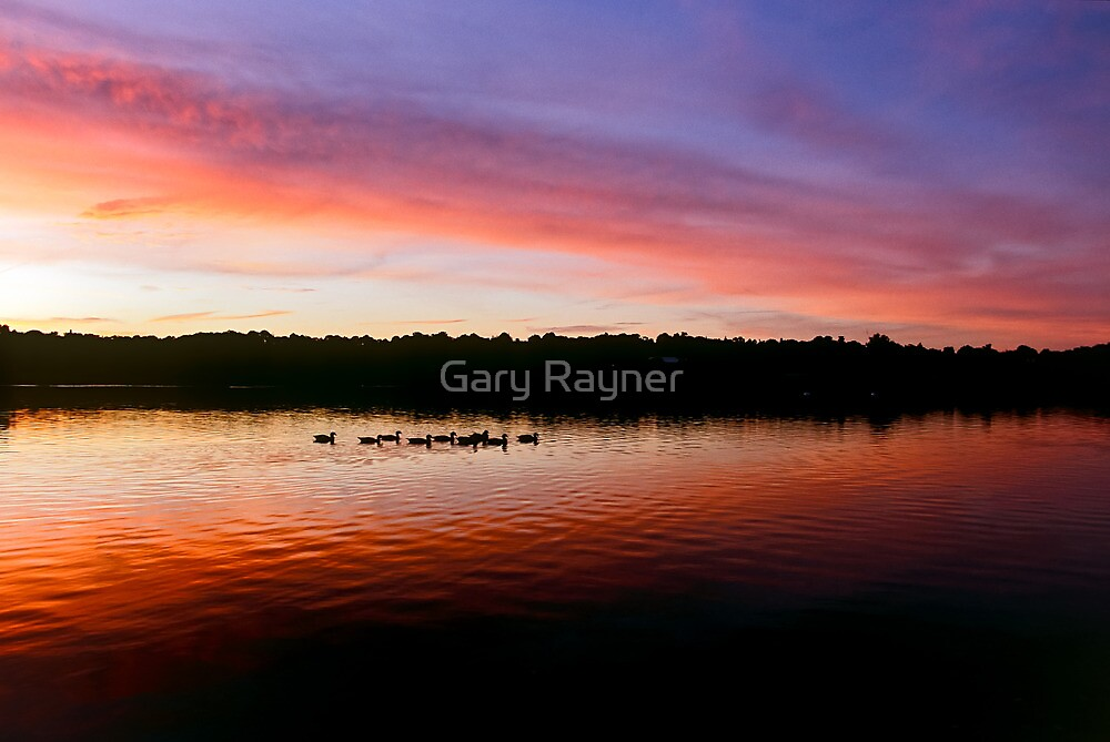Geese silhouettes at dusk by Gary Rayner