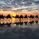 ''Camels at Cable Beach'' by bowenite