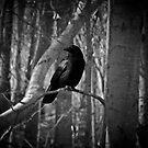 The Black Crow by Marcia Rubin