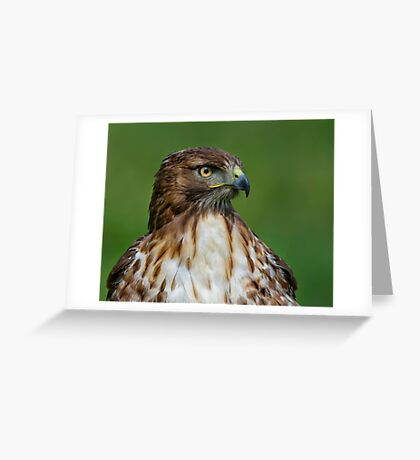 Profile of a Red Tailed Hawk Greeting Card