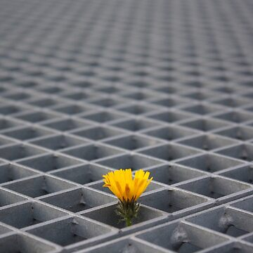 Lonely yellow flower among metal grid by martinbenito