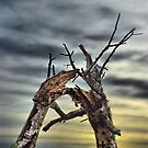 Tree Snap by relayer51