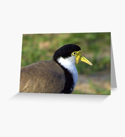 North Head Manly - Masked Lapwing Greeting Card