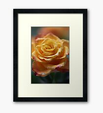 "75 years ago: great hit ""Autumn Roses"", tango . F E A T U R E D  in Superbly Visual. Framed Print"