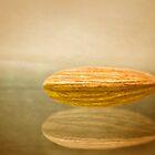 Prunus Dulcis by DmitriyM