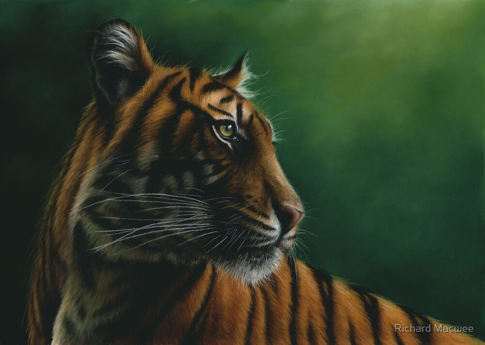 Wildlife Painting of a Tiger by Richard Macwee