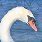 Portrait Of A Swan  by NewfieKeith