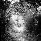 The Fairy Pathway (35mm) by Darren Bailey LRPS