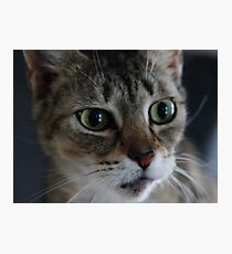Transfixed Abyssinian  Photographic Print