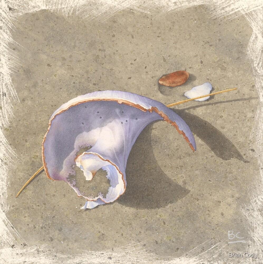 Steep Hill Beach Worn Shell by Brian Cody