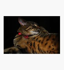 My Little Bengal Girl? Photographic Print