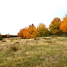 Fall Colors Prince Edward Island Landscape by nadinestaaf