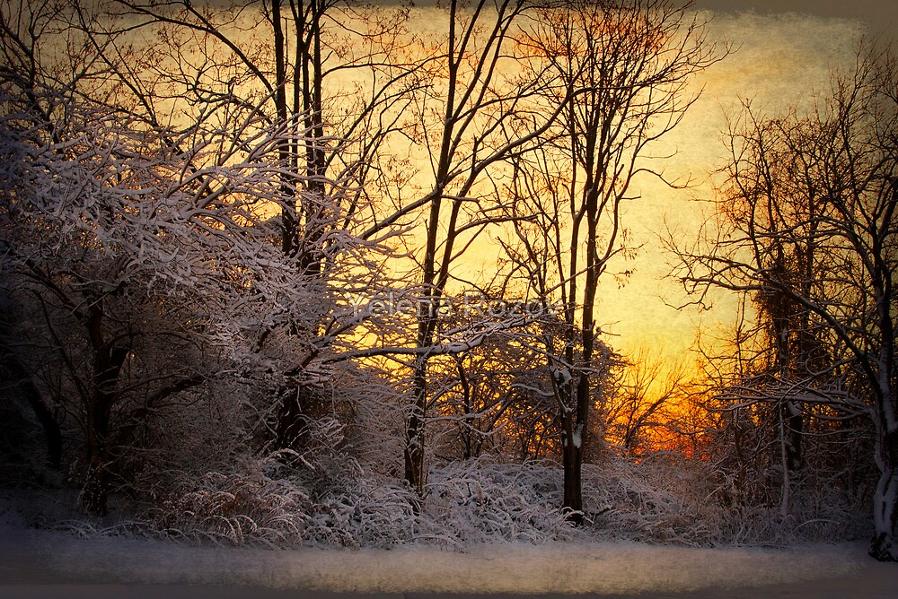 Once Upon a Winter Morning.. by Yelena Rozov