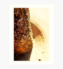She Sells Buy the Seashore  Art Print