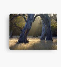 Forest's Edge Canvas Print