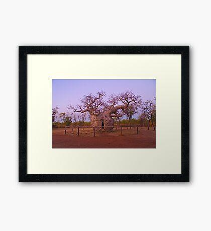 Boab Tree, Kimberley, WA Framed Print