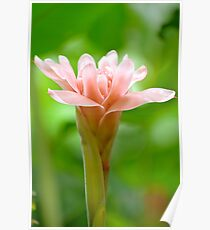 The Garden 8 - Ginger Torch Lily Poster