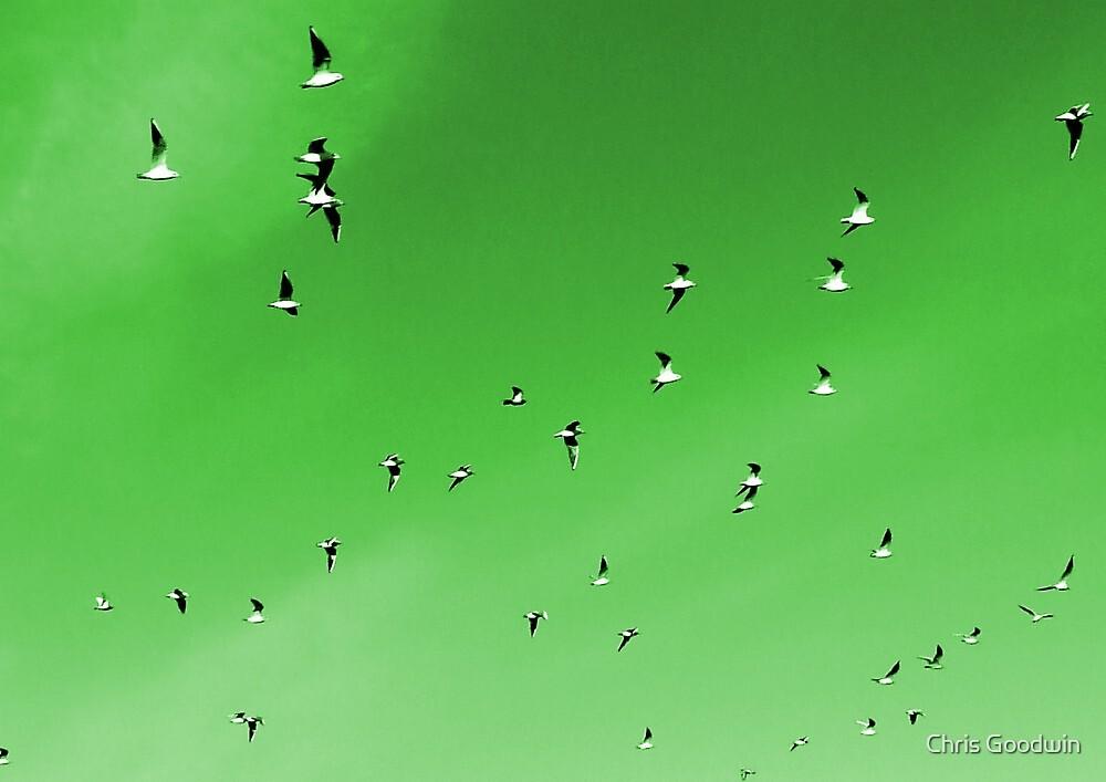 Flock of Seagulls by Chris Goodwin